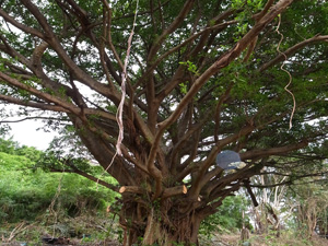 180226_tree